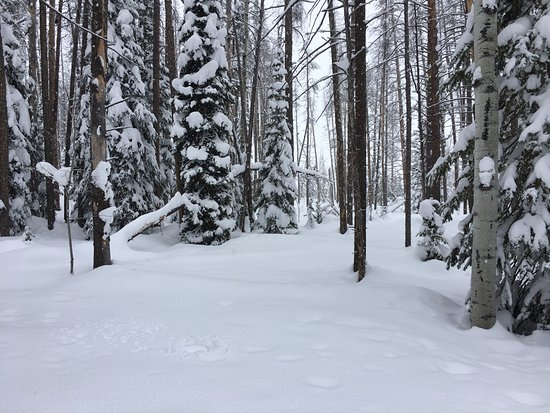 Clark, CO: View in back country while cross country skiing.