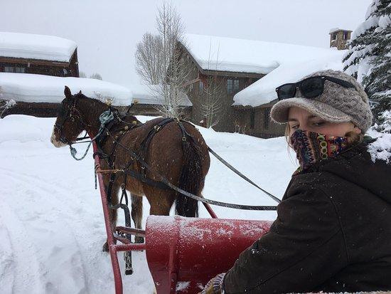 Clark, CO: Sleigh ride!