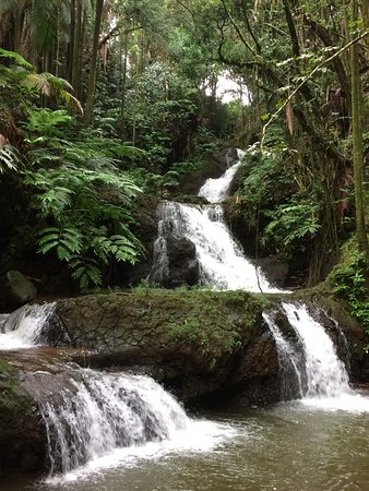 Papaikou, Hawaï: Lush tropical garden with easy to see waterfall