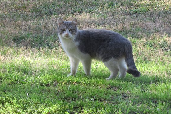 Burnet, TX: One of the stray cats we saw.