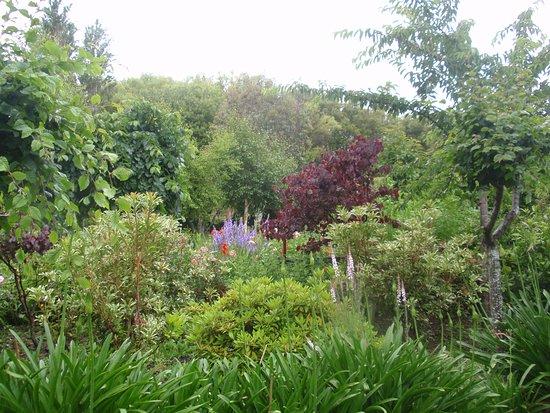 Folster Gardens B & B accomodation: Summer garden