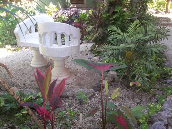 Hotel Macanche Bed & Breakfast: grounds with a large variety of tropical plants and flowers