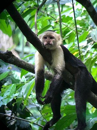 Puerto Jimenez, Kostaryka: photo0.jpg