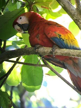 Puerto Jimenez, Kostaryka: photo1.jpg