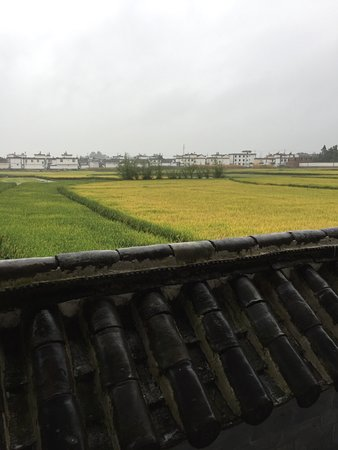 The Linden Centre: Paddy fields