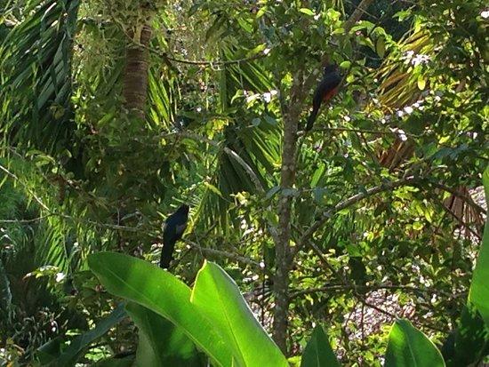 Orange Walk, Belize: Around Chan Chich lodge