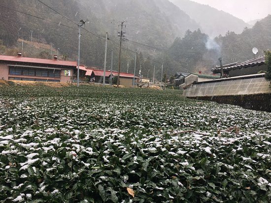 Kawanehon-cho, Giappone: 茶畑にうっすら雪が積もる寒い日に温まりました