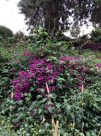 Havelock North, Nueva Zelanda: Flowering bush on our way.
