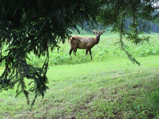 Orick, CA: An elk wondering why we were looking at it.