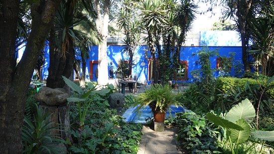 Museo de Frida Kahlo: Jardin autour de la maison de Frida