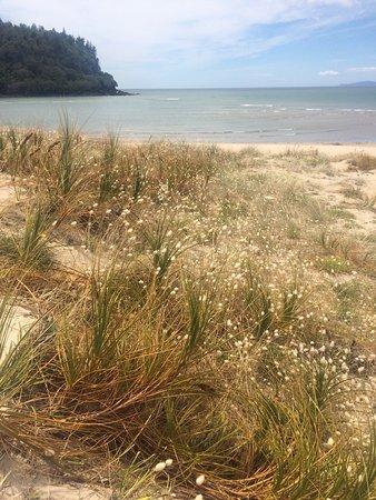 Whangamata, New Zealand: photo1.jpg