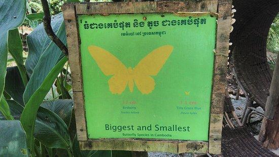 Kep, كامبوديا: IMG_20170111_113812_large.jpg