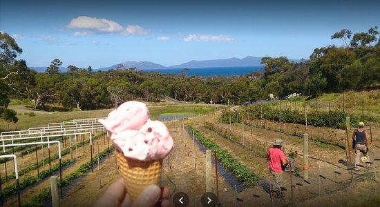 Swansea, Australia: ma glace a la fraise avec des pépite de chocolat devant la vue géniale