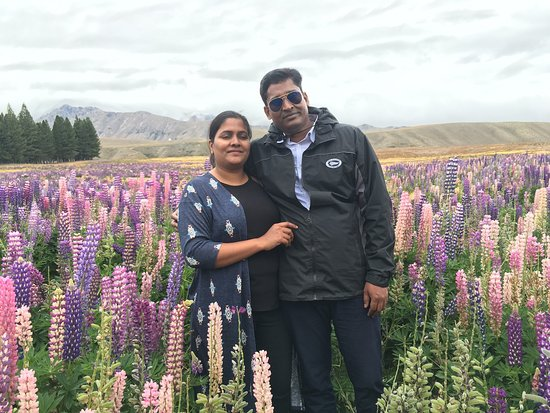 Lake Tekapo Village Motel: Lavender farms