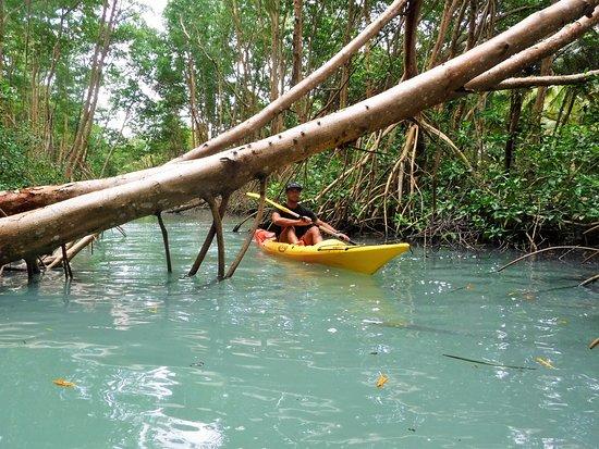 Tropi-kayak Guadeloupe