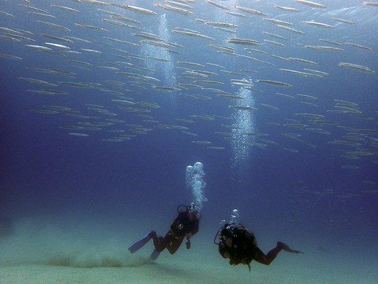 Kadena-cho, Giappone: Cardume de Barracudas - Aloha Divers Okinawa