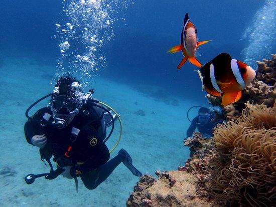 Kadena-cho, Japón: Peixe Palhaço - Aloha Divers Okinawa