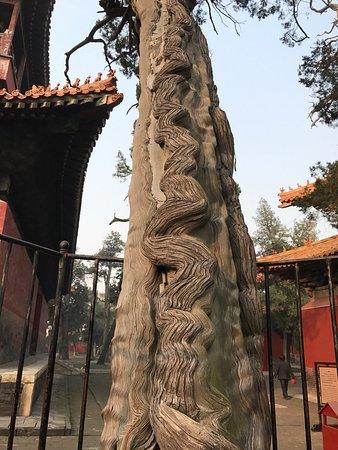 Qufu, Chiny: photo1.jpg