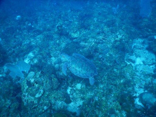 Vigilant Divers Anguilla: photo4.jpg