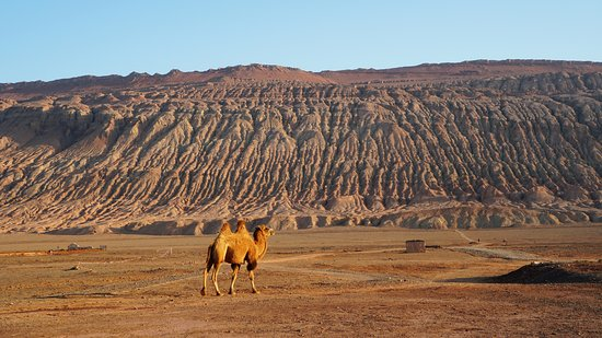Turpan, จีน: Camel against the Flaming Mountain