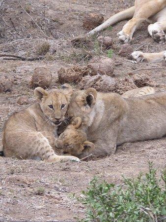Shamwari Game Reserve Lodges Foto