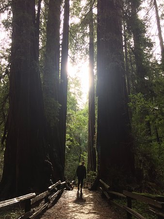Mill Valley, Kalifornien: Surrounded by Redwoods
