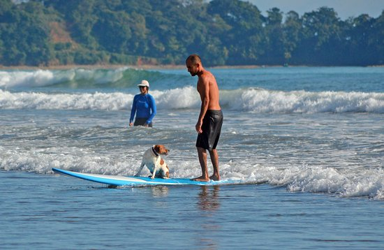 Dominical, Costa Rica: Dogs can surf too!