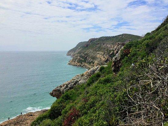 Plettenberg Bay, Republika Południowej Afryki: IMG-20170107-WA0012_large.jpg