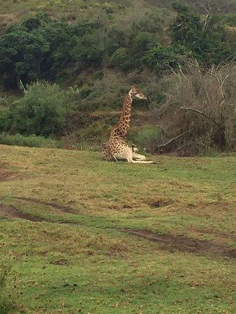 Mossel Bay, جنوب أفريقيا: Botlierskop Private Game Reserve