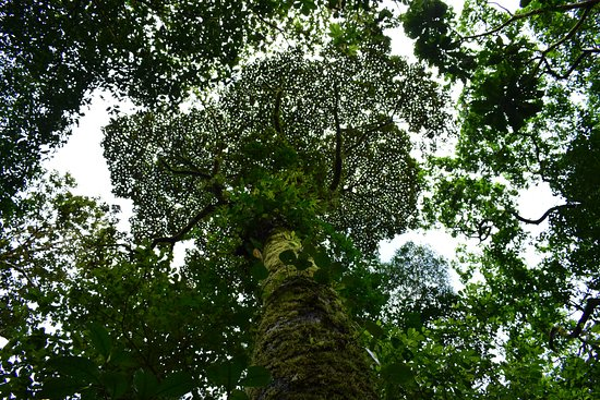 Tenorio Volcano National Park, Costa Rica: Bellos árboles