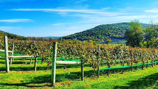 Purcellville, VA: Vine View