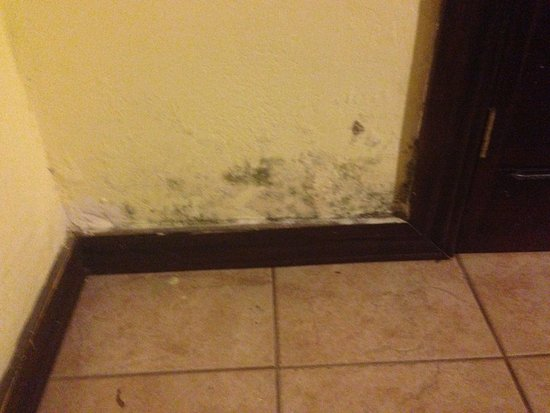 Hotel Pacandé: Mildew on the wall in the bedroom