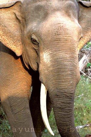 Tissamaharama, Sri Lanka: photo3.jpg