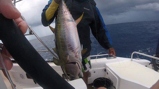 Amitie, Σεϋχέλλες: Yellow fin tuna. Nice fight