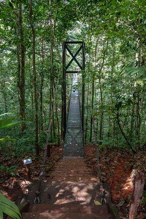 بوسكي ديل كابو رين فورست لودج: Suspension bridge