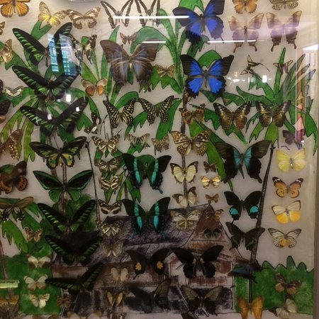 Klapmuts, Sudáfrica: Butterfly 'display'