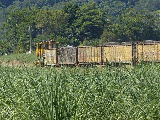 Mossman, Australia: sugar cane being transported after picking