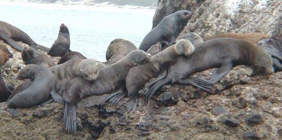Mossel Bay, جنوب أفريقيا: Seal sleeping on Island