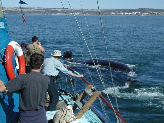 Mossel Bay, جنوب أفريقيا: Close encounter with Southern right whales