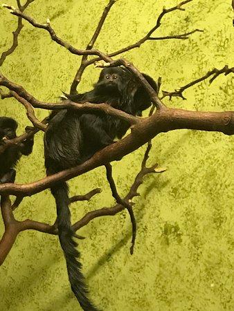 Edinburgh Zoo: photo1.jpg