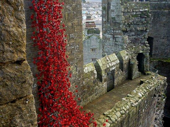 The Poppies: Weeping Window, Caernarfon Castle (November 2016)