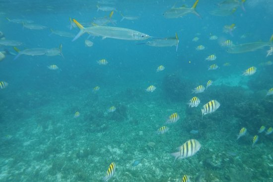 Sea Shell Charters: The snorkeling was amazing!