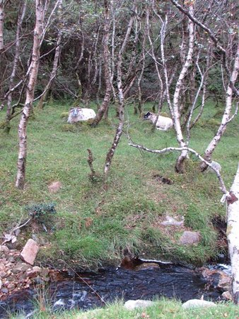 Clonmany, Irlanda: The meandering walk to the waterfall