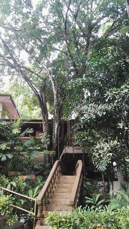 Jungle Beach Hotel at Manuel Antonio : las escaleras para subir a nuestra habitación
