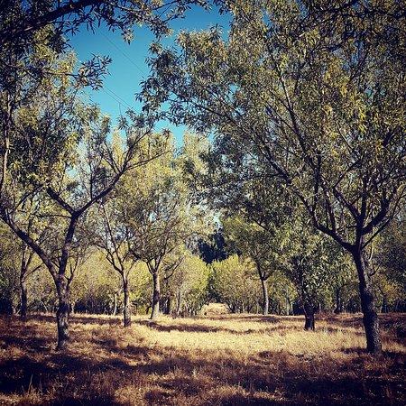 Bosque Los Perales