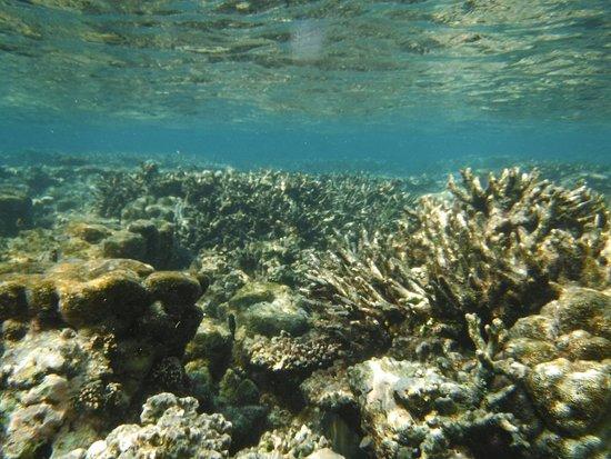 Thulusdhoo Island: 2016_1113_23590100_large.jpg