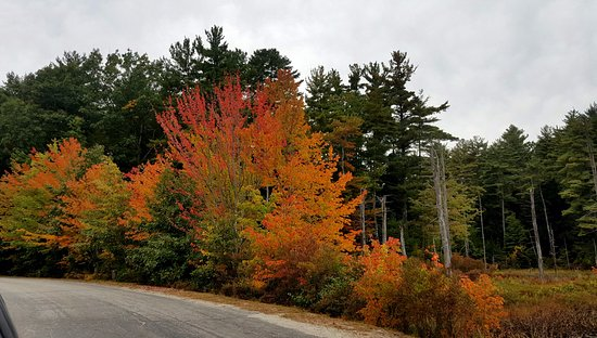 Nottingham, NH: Fall colors along the main campground road