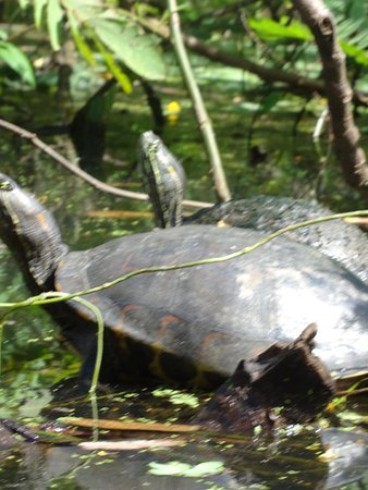 Rio Istian: Turtles! We saw oodles.