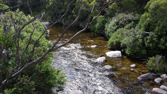 Thredbo Village, Australia: Trout spotting from suspension bridges along Thredbo Valley Track