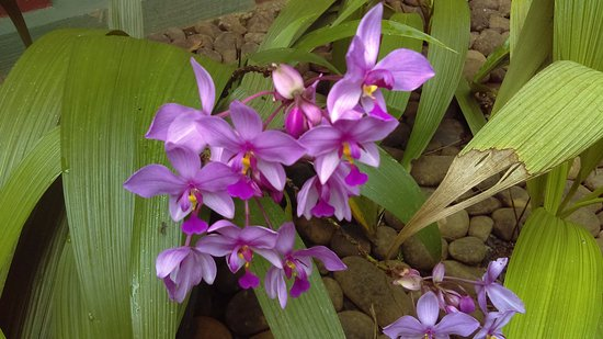 Sarapiqui, Costa Rica: beautiful flowers everywhere...an orchid